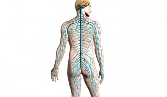 Damages: Spinal cord and peripheral nerve injuries
